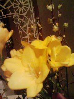 きょうのお花