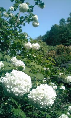 湯河原でお花畑